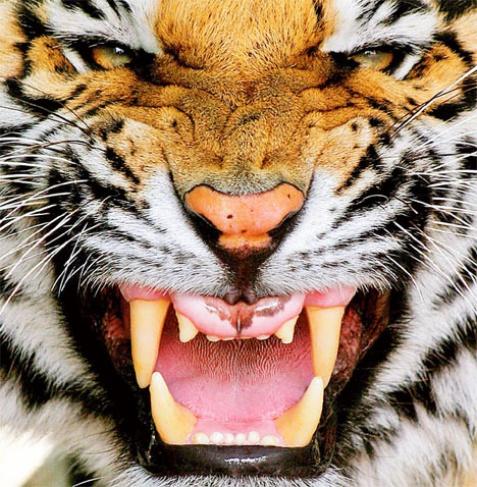 detroit tigers score from last night size1287.5KB