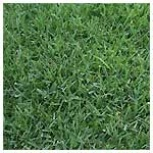 what is the best weed killer for bermuda grass size75.5KB
